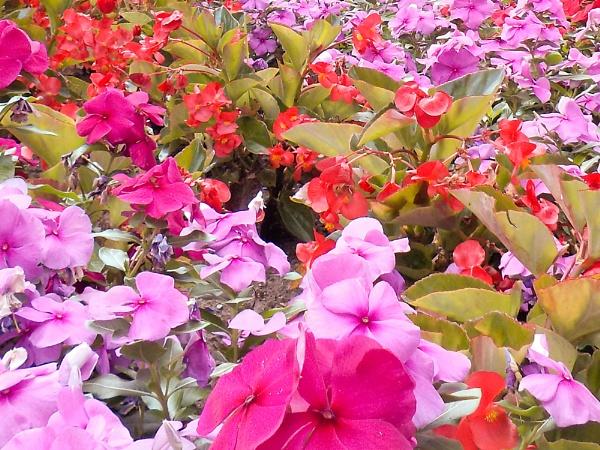 FLOWERS on BAY ST S # 358 by TimothyDMorton