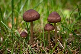 Morning 4 mushrooms