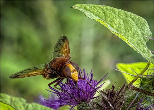 Big Bug by mjparmy