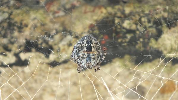 Big Spider by YoungGrandad