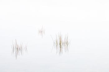 Misty Morning at Colliford Lake