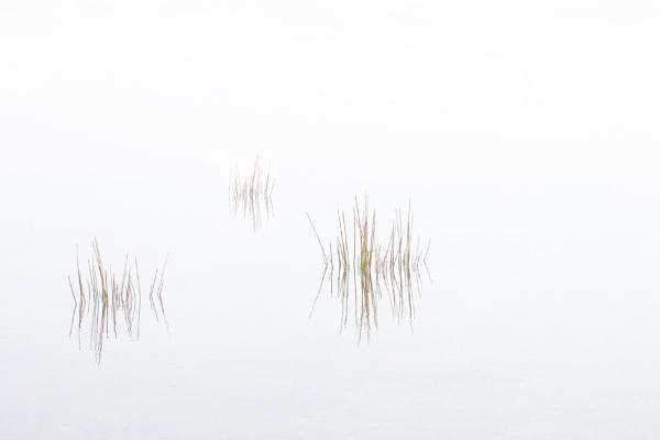 Misty Morning at Colliford Lake by sunsetskydancer