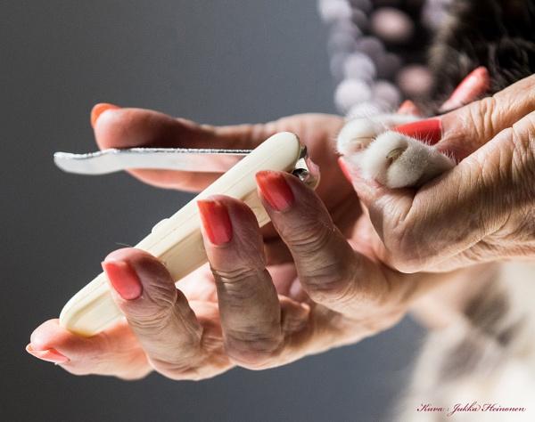 Manicure. by kuvailija