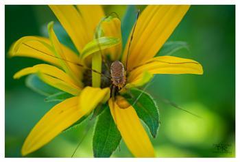 Spider on Yellow Flower