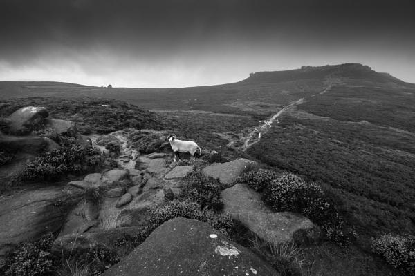 Bleak Moor by Trevhas
