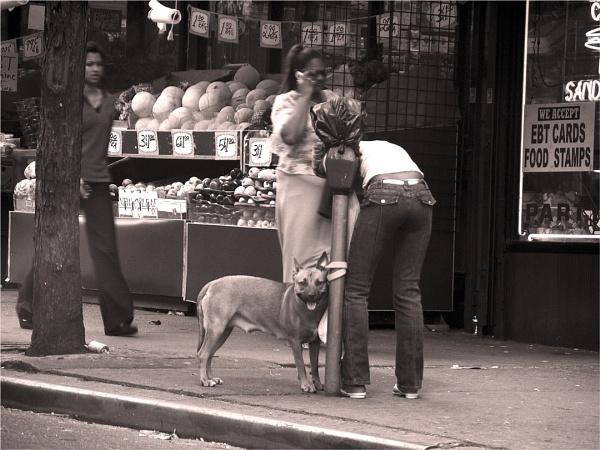 this dog\'s life by carmenfuchs