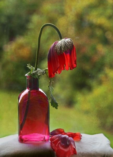 Poppy ending by deavilin