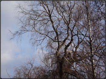 the egret-tree