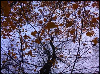 leafstorm