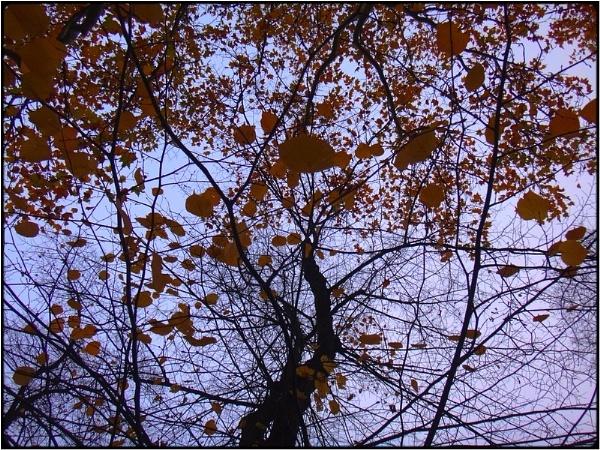 leafstorm by FabioKeiner