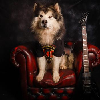 Rock dog 🤘