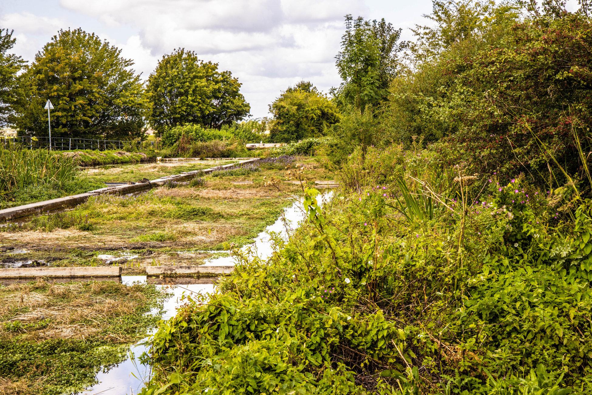Ewelme Watercress beds