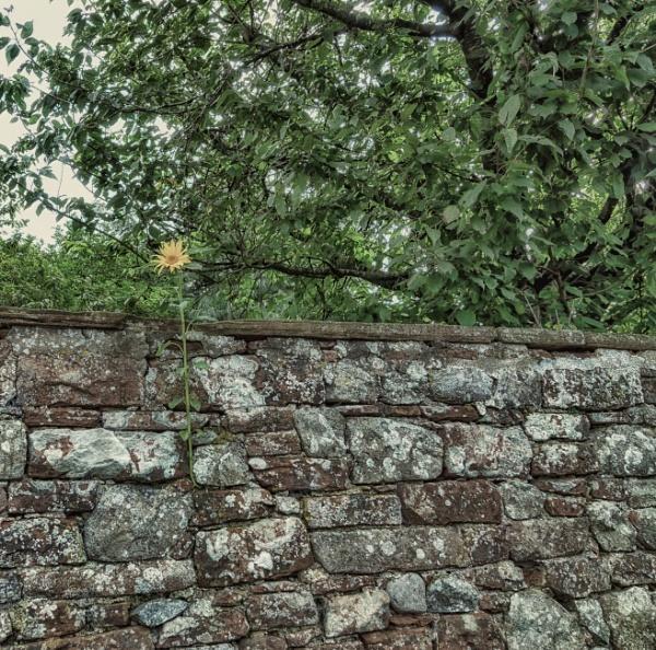 Wallflower by BillRookery