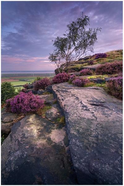 Helsby Hill Heather. by Satlight