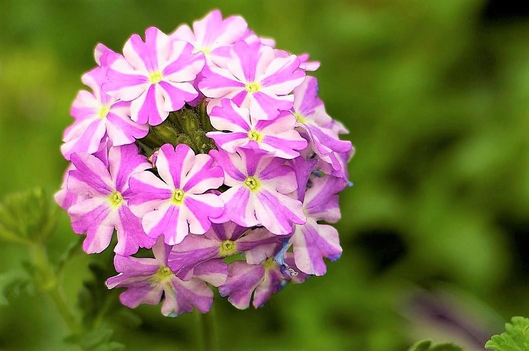 Very pretty colors.  :))