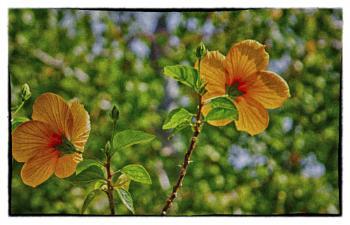 back lit blooms