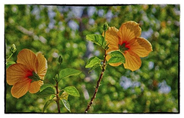 back lit blooms by bornstupix2