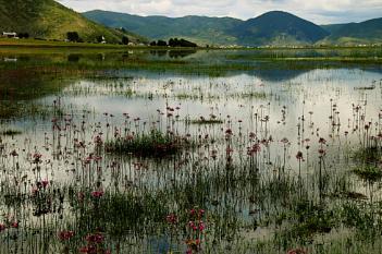 Wetlands, Shangri La