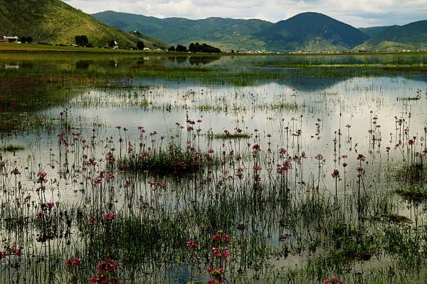 Wetlands, Shangri La by ranjit1945