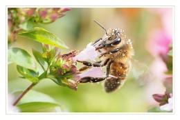 Photo : Pollen Collection