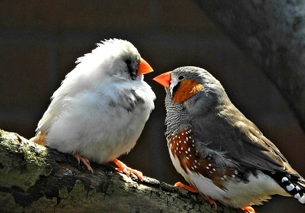 Cute pair by Chelle65