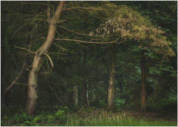 Charnwood by JelFish