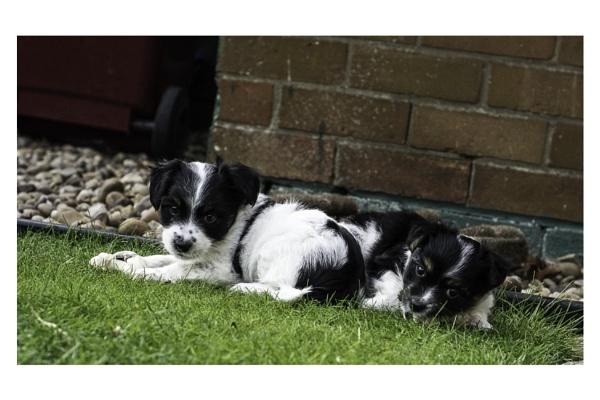 pups by madbob