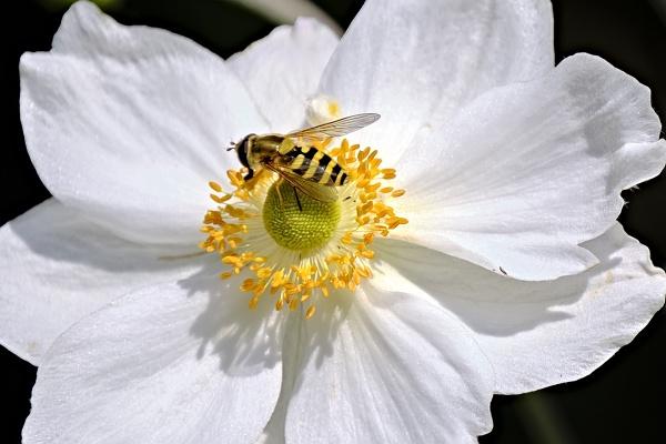 Wasp by photographerjoe