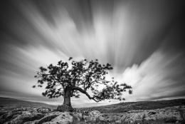 Dales Lone Tree