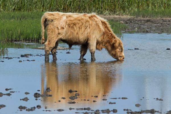 Large brown wader by oldgreyheron