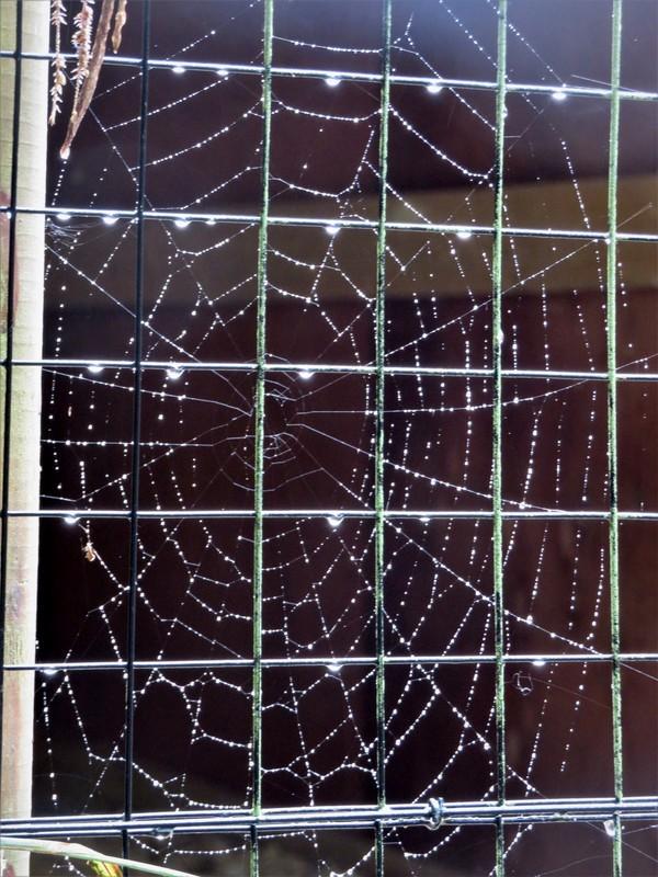 Web behind bars