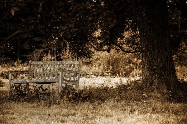 Under The Tree by Merlin_k
