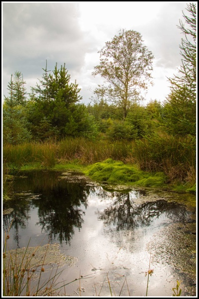 reflection by aka