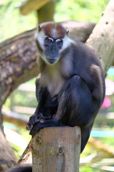 Monkey by touchingportraits