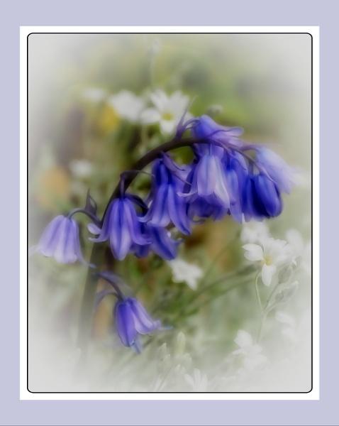 Misty Blue by sweetpea62