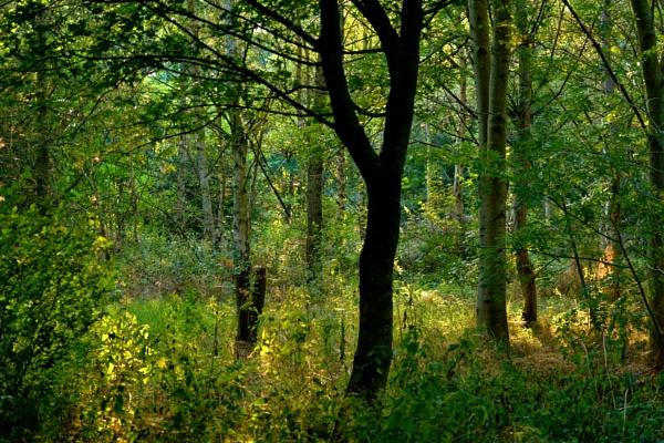 Woodland light. by georgiepoolie