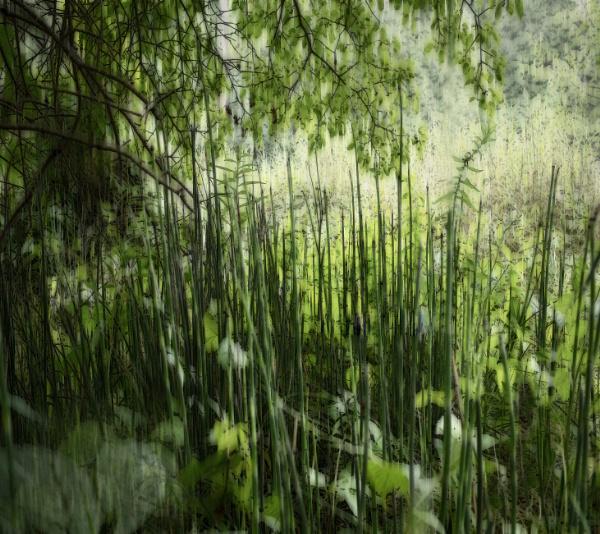 Wild Asparagus by banehawi