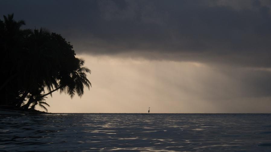 Bird in the storm...