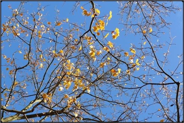 yellow fall by FabioKeiner