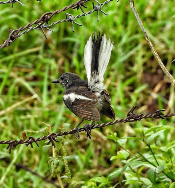 Dancing bird by gautamc