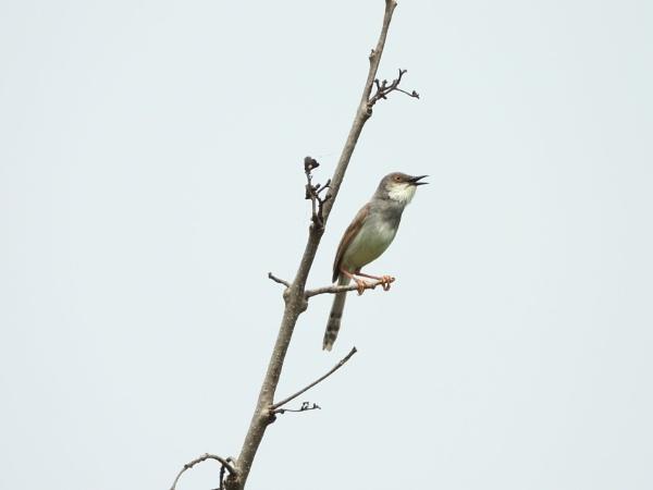 Bird by gautamc