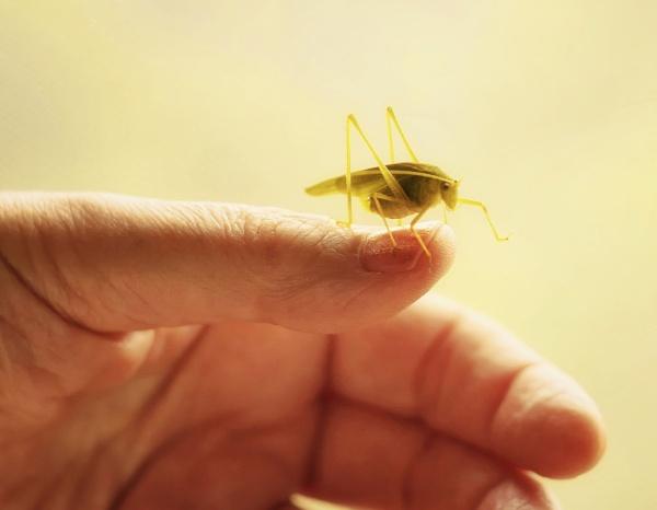 My Little Green Friend by LoryC