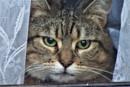 Cat in a window. by wsh