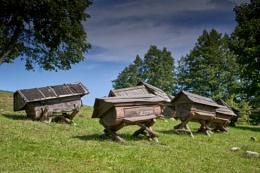 Ancient hives