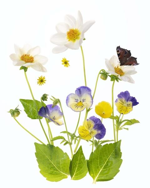 Butterfly Garden by swilliams71