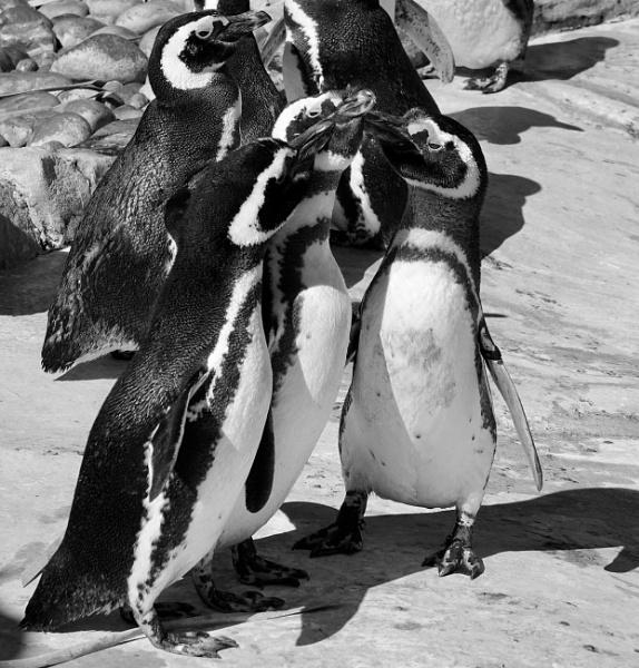 Group Hug by Debmercury