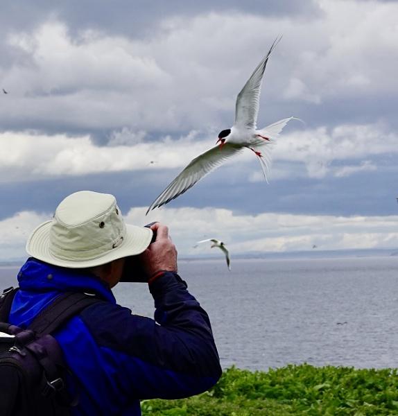 Tern Paparazzi by Debmercury