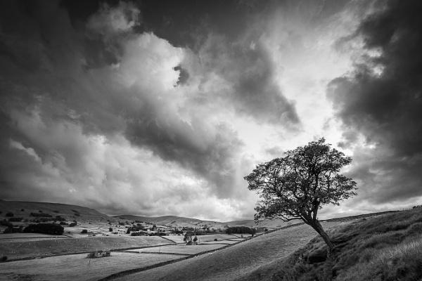 Wensleydale Hawthorn by barrywebb