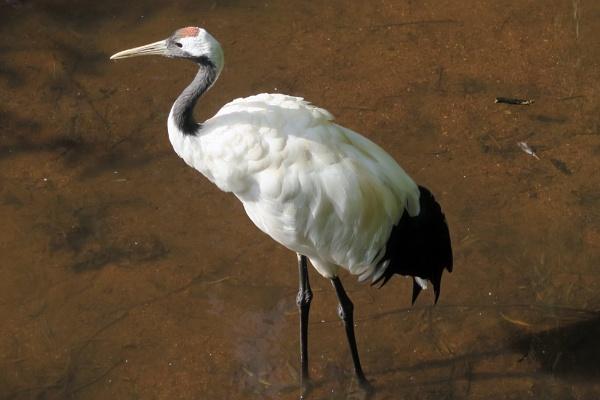 Crane by Silverzone