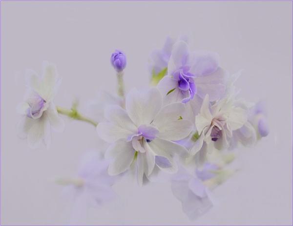 Misty by sweetpea62